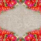 Fyrkantig tappningram med röda blommor Arkivfoton