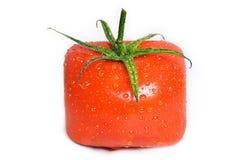 Fyrkantig tomat med vattendroppar. Royaltyfri Foto