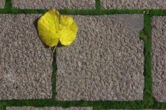 Fyrkantig trottoar med gula tjänstledigheter 2 arkivfoto