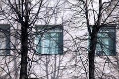 Fyrkantiga blåa fönster och avlövade träd Arkivbild