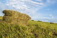 Fyrkantiga haybales av gräshö Royaltyfria Foton
