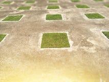 Fyrkantigt grönt gräs på gammalt konkret golv effekt för 50mm bakgrundsblur aktiverar sidan för nattnikkordeltagaren royaltyfria foton