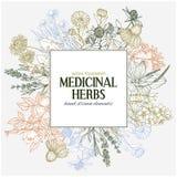 Fyrkantigt textfält med hand-drog kulöra medicinska örter och blommor vektor illustrationer