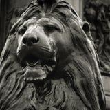 fyrkantigt trafalgar för lion Arkivbilder