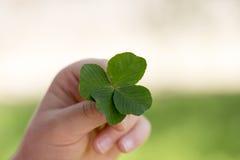Fyrklövern är en sällsynt variation av den gemensamma tre-bladet växten av släktet Trifolium royaltyfri fotografi