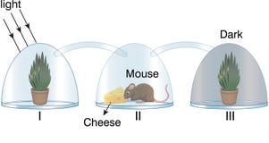 Fysik - mause och växt för exponeringsglasfanexperiment vektor illustrationer