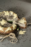 Gâteau au fromage avec les graines de sésame noires Halloween Images stock