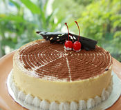 Gâteau de Tiramisu Photographie stock