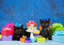 Gâteau miniature de beignet de fête d'anniversaire de chatons Photos libres de droits