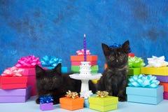 Gâteau miniature de chatons d'anniversaire Image libre de droits
