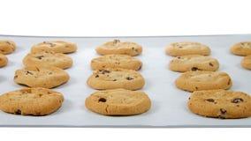 Gâteaux aux pépites de chocolat sur un plateau de cuisson d'isolement image libre de droits