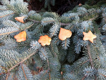 Gâteaux de miel d'or de Noël Photos libres de droits