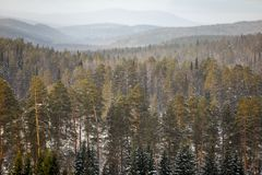Góry zakrywać z lasami w zimie zdjęcie royalty free