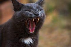 Gähnende Katze Stockbild
