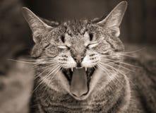 Gähnende Miezekatze im Sepia Lizenzfreie Stockfotografie