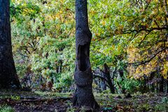 Gähnender Baum stockbild