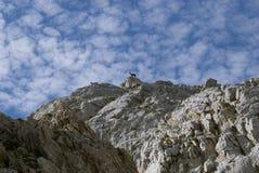 Gämse auf Bergspitze Stockfotos