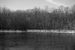 Gänse auf gefrorenem See Stockfotos