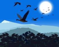 Gänse, die über Treetop fliegen Lizenzfreie Stockfotografie