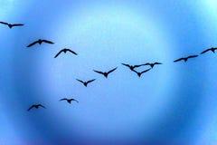 Gänse, die in eine Traumwelt fliegen Lizenzfreie Stockbilder