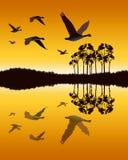 Gänse, die niedrig über Wasser fliegen Stockfoto