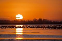 Gänse am Sonnenaufgang Lizenzfreie Stockfotos
