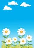 Gänseblümchen Lizenzfreie Stockbilder