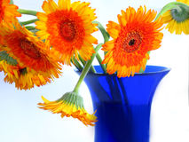 Gänseblümchen auf blauem Vase Stockfotografie