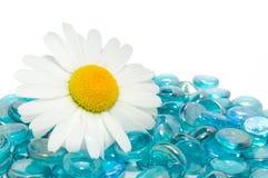 Gänseblümchen auf blauen Glassteinen Lizenzfreies Stockfoto