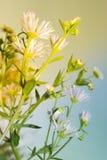 Gänseblümchen auf dem Gebiet am sonnigen Tag Lizenzfreies Stockfoto