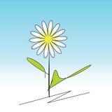 Gänseblümchen auf einem weißen und blauen Hintergrund Lizenzfreies Stockfoto