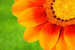 Gänseblümchen auf Gras Lizenzfreies Stockfoto