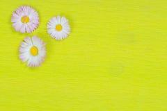 Gänseblümchen auf Kalkpapier Stockfotos