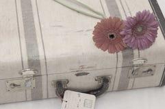 Gänseblümchen auf suitcasee Stockfotos