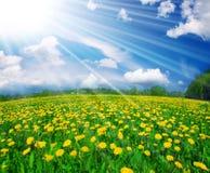 Gänseblümchen auf Weiß Lizenzfreies Stockfoto