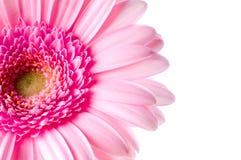 Gänseblümchen auf Weiß Stockbild