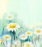 Gänseblümchen blüht Malerei Stock Abbildung