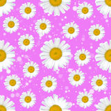 Gänseblümchen blüht nahtloses Muster auf abstraktem Hintergrund Stockbilder