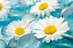 Gänseblümchen-Blumen auf blauen Glassteinen lizenzfreie stockbilder