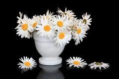 Gänseblümchen-Blumen-Schönheit Stockfotos