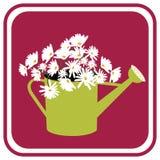 Gänseblümchen in der Bewässerungs-Dose Lizenzfreie Stockbilder