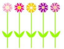 Gänseblümchen in der Farbe Lizenzfreie Stockfotografie