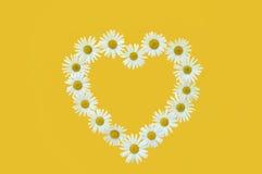 Gänseblümchen in der Liebesform über gelbem Hintergrund lizenzfreie stockfotografie