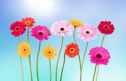 Gänseblümchen in der Sommerzeit Lizenzfreie Stockfotografie