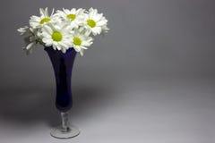 Gänseblümchen in einem blauen Vase Lizenzfreies Stockfoto