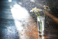 Gänseblümchen in einem Glasvase Lizenzfreies Stockfoto