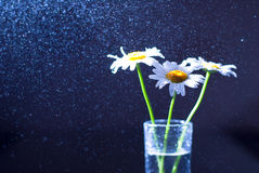 Gänseblümchen in einem Glasvase Stockbilder