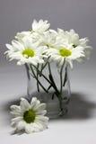 Gänseblümchen in einem klaren Vase Lizenzfreie Stockbilder