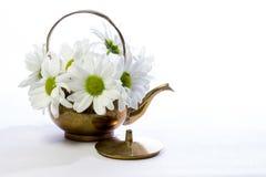 Gänseblümchen in einem kupfernen Kessel Stockfoto