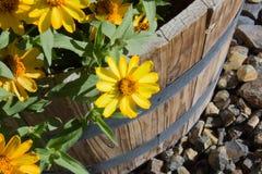 Gänseblümchen in einem Pflanzer Lizenzfreie Stockfotografie